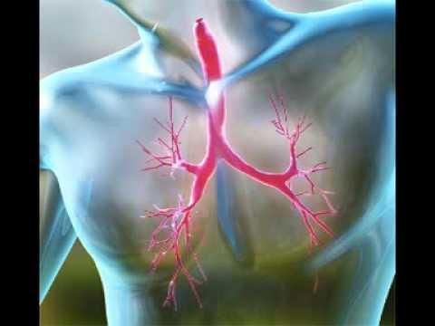 Остеопороз - Причины, симптомы, профилактика, лечение.