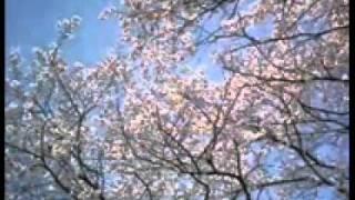 Gambar cover Sakura iro instrumental