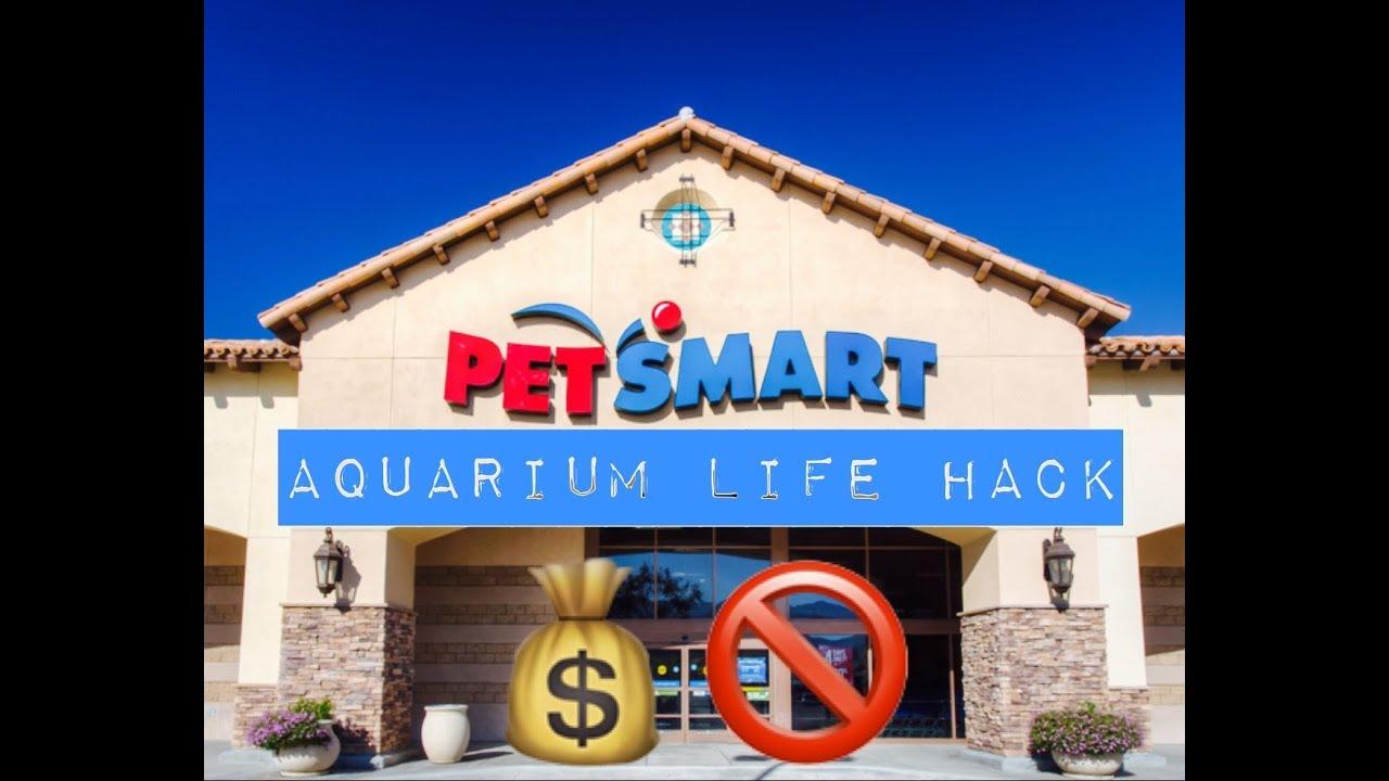 PETSMART LIFEHACK | CHEAP AQUARIUMS | NO ONE KNOWS THIS TRICK! | Betta Fish Tank