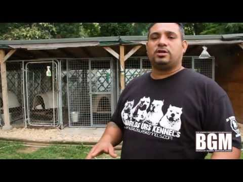 American Bully: Da Worlds Urs Kennels Bring you into their Backyard.