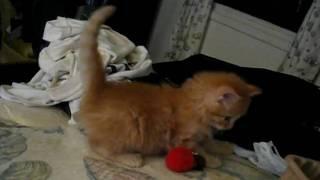 Widget with toy