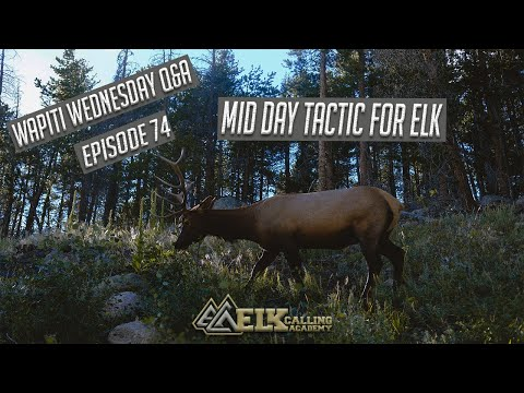Midday Tactic For Bowhunting Elk On Public Land