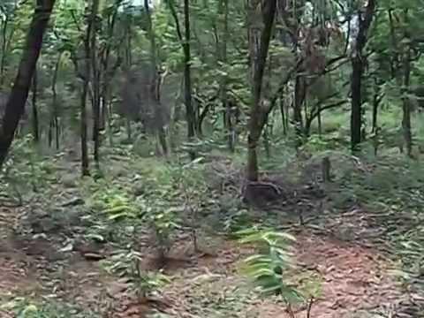 mukutmanipur forest