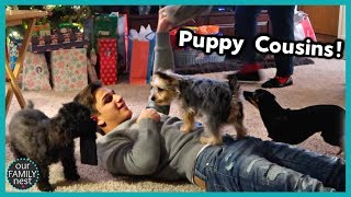 CHRISTMAS PRESENTS & PUPPIES - Part 2 Christmas Day