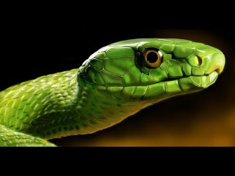 Tree Python Green Mamba Spitting Cobra Black Mamba