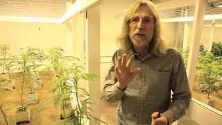 Grow Cannabis - Indoor Light Efficiency - By Jorge Cervantes