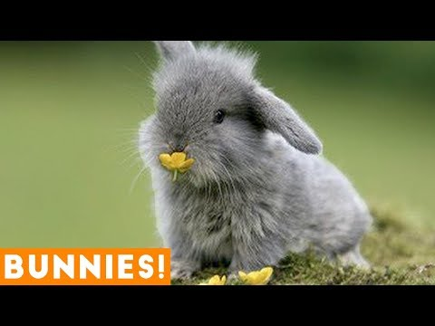 Funniest Rabbit Videos Weekly Compilation 2018 | Funny Pet Videos