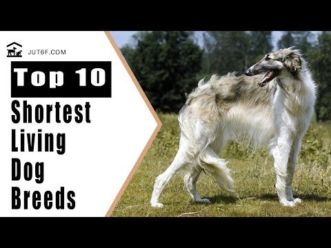 Shortest Lifespan Dog - Top 10 Shortest Living Dog Breeds In The World