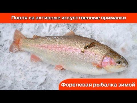 на который обнаруживать царская рыба возьми платном пруду
