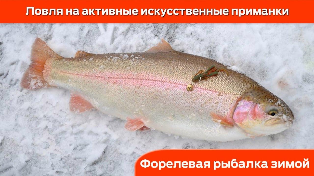 Форелевая рыбалка зимой : Ловля на активные приманки
