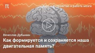 мозжечок и базальные ганглии  Вячеслав Дубынин