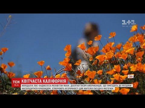 ТСН: Маковий апокаліпсис: каліфорнійське містечко потерпає від туристичної навали
