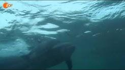 Abenteuer Forschung: Der Halbschlaf der Delfine