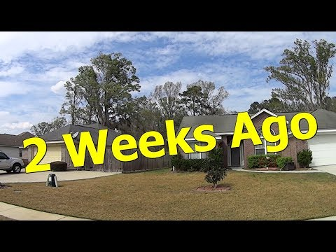 *RESULTS* Scott's Bonus S Weed and Feed 14 Days Later - DIY Lawn Care Treatment