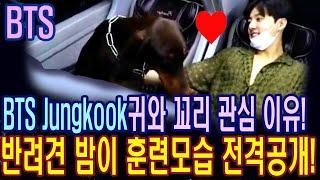 [방탄소년단Jungkook]정국 도베르만 '밤'이 훈련모습 전격공개!'귀와 꼬리'에 관심 집중된 이유! BT…