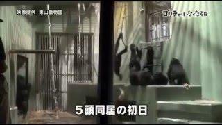 ザ・ドキュメンタリー 2016年3月27日 160327 「ゴリラがいなくなる日」