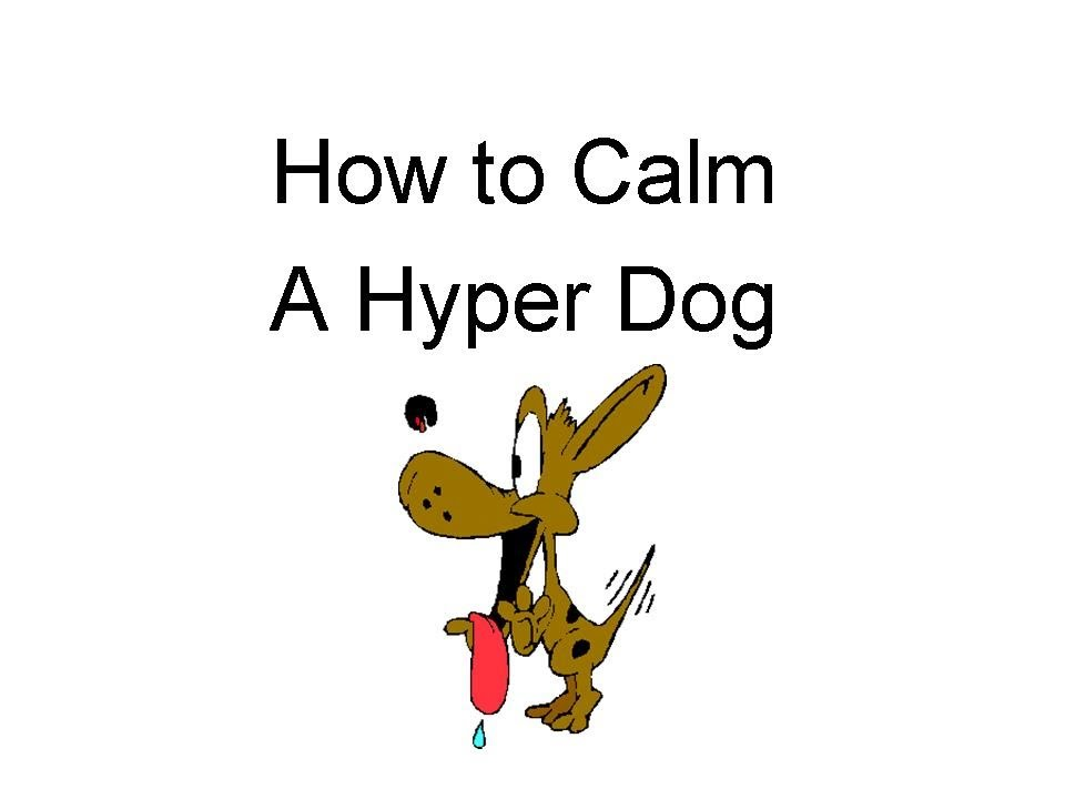 how to calm a hyper dog - youtube