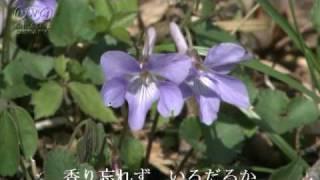 吉田真里子 - 冬すみれ