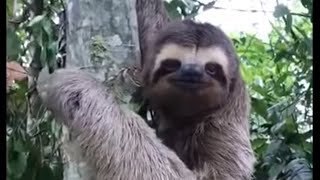 Sloth waves and smiles to man that helps him cross the street