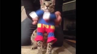 ЛУЧШИЕ ПРИКОЛЫ 2017 года , топ подборка приколов про котов и котов