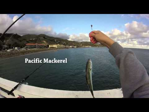 Malibu Pier Fishing for Mackerel and Seal Spotting