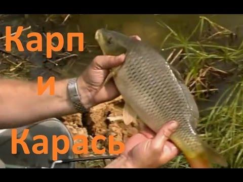 Диалоги о рыбалке - 2-  Карп  Карась