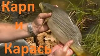 Диалоги о рыбалке - 2-  Карп  Карась(Внешностью рыба похожа и на карася, и на карпа. Из-за отсутствия усиков на губах многие ее называют просто..., 2012-09-15T20:12:41.000Z)