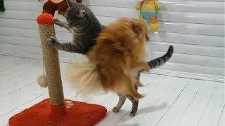 СОБАКА ДОСТАЛА КОТА. Смешные коты и собаки 30 сек / Галчата тв