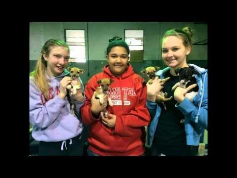 Dresden, TN Hoarding dogs rescued by Best Chance Aninal Rescue in Scotts Hill, TN