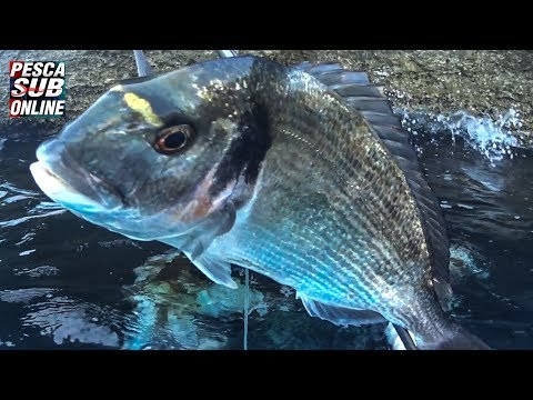Spearfishing corsica fishing orata Pesca submarina chasse sous marine from YouTube · Duration:  14 minutes 55 seconds