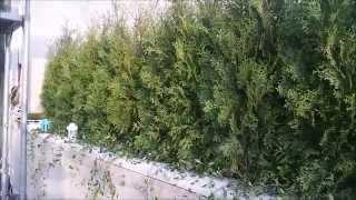 Озеленение террасы Днепропетровск, сад на террасе(, 2015-09-04T09:09:34.000Z)