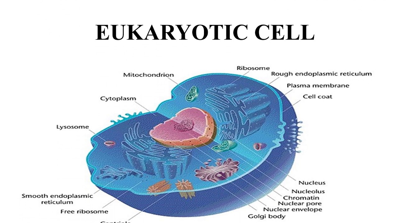 Basic Structure Of Cell