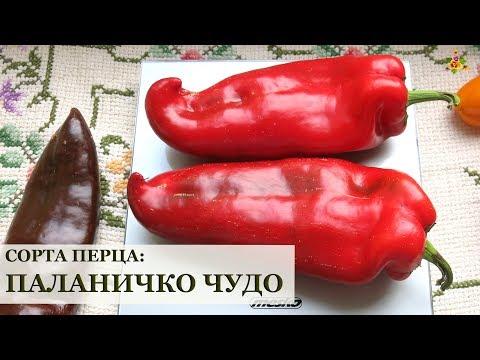 Перец ПАЛАНИЧКО ЧУДО * Сорта перца