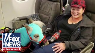 Only dogs will be allowed on planes as service animals: Report