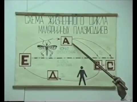 Малярия - это... Что такое Малярия?