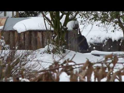 Singe sous la neige au Zoo de Lille