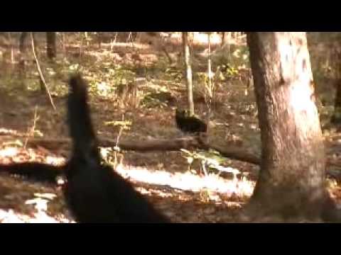 Big Cat Sightings In Alabama