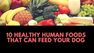 Healthy Human Foods That Can Feed Your Dog