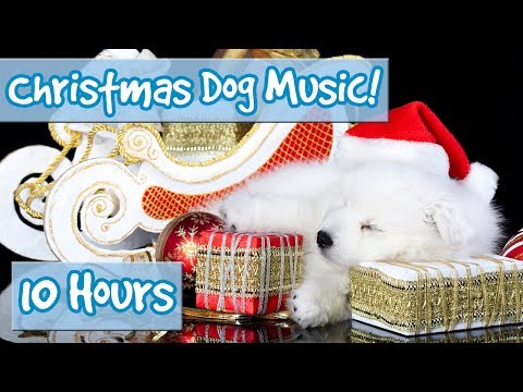 The Best Christmas Therapy Music for Dogs! Calming Music for Dogs with Classic Christmas Songs! 🎅🐶