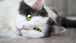 Funny CATS Videos Compilation #55