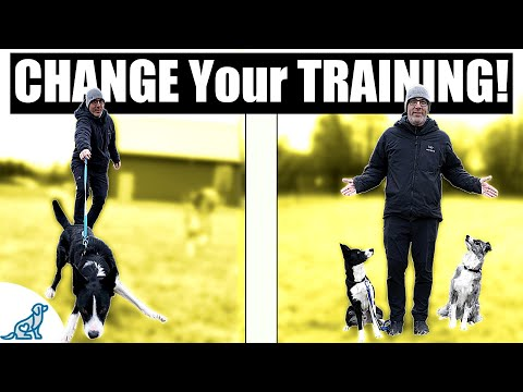 Want To Know How Dog Trainers' Dogs Get Trained So Quickly?