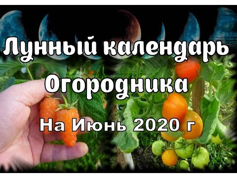 Вопрос: Когда сажать перец на рассаду в 2020 году по лунному календарю?