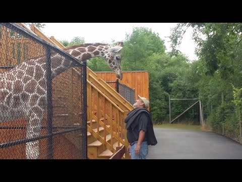 Go Inside the Wild Animal Park in Chittenango