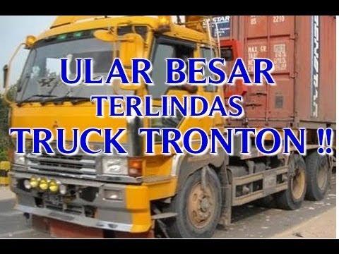 """ULAR BESAR """"TERLINDAS TRUCK CONTAINER"""" SETELAH ULAR BESAR MAKAN MANUSIA DI KALIMANTAN !!"""