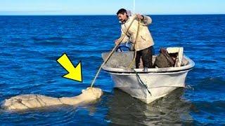 Als dieses Tier um sein Leben kämpfte, eilte ein Inuit, um es zu retten!