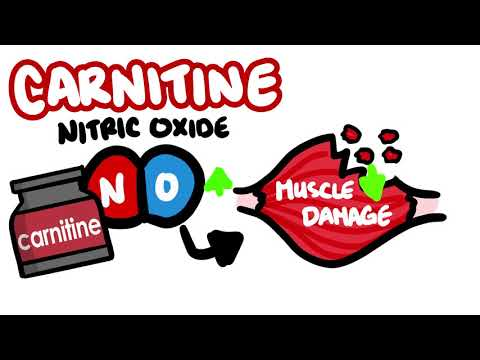 What is CARNITINE and Is It Worth Taking? | QuickFIT #2