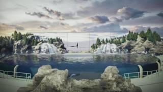 Summer 2017: Orca Encounter    SeaWorld® San Diego