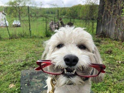 Stop Barking Using E collar & Bark Collar