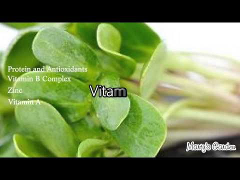 Sunflower Sprouts the Health Benefits and How to Grow
