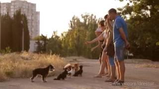 Дрессировка собак Севастополь Симферополь аджилити